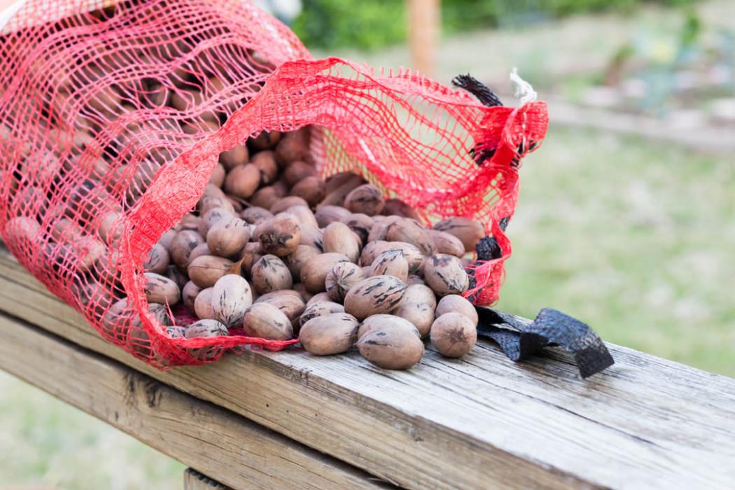 Bag of Texas Native Pecans