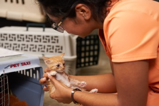 Cute Kitty San Antonio Pets Alive