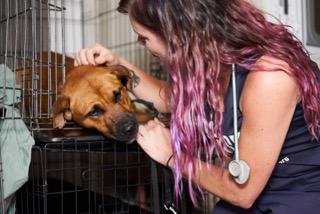 How To Help San Antonio Pets Alive!'s Hurricane Harvey Rescues