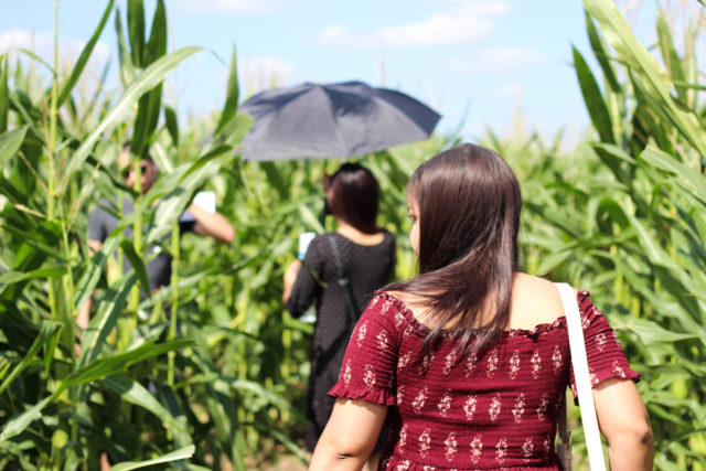 Beginner's Guide to The South Texas Maize in Hondo