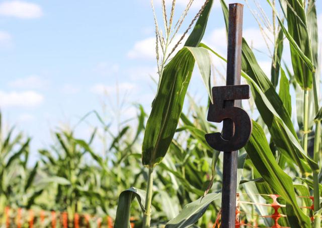 South Texas Maize Hondo Stop 5